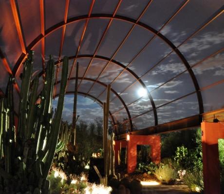 Desert Botanical Garden at Night – Phoenix, Arizona